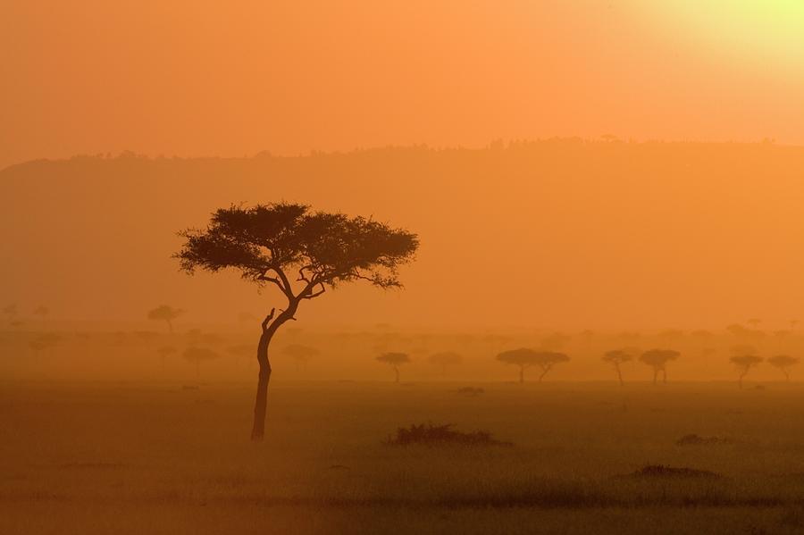 Acacia Tree At Sunset, Masai Mara Photograph by James Hager / Robertharding