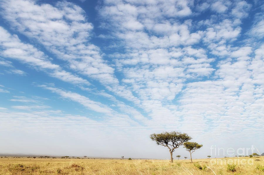 National Photograph - Acacia Trees In The Masai Mara by Jane Rix