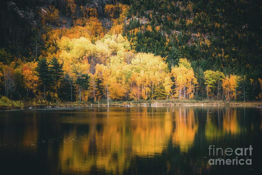 Acadia Gold by Susan Garver