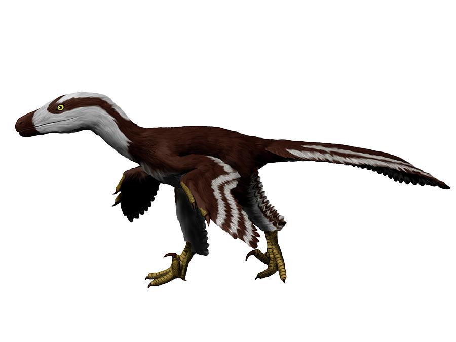 Acheroraptor Temertyorum, White by Nobumichi Tamura