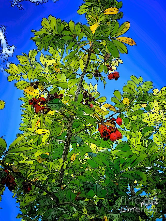 Ackee Tree by Laura Forde
