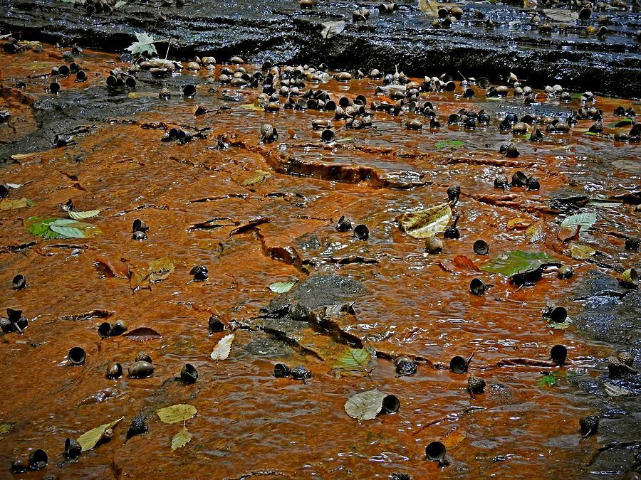 Acorns In The Ravine  Kirtland, Ohio 4