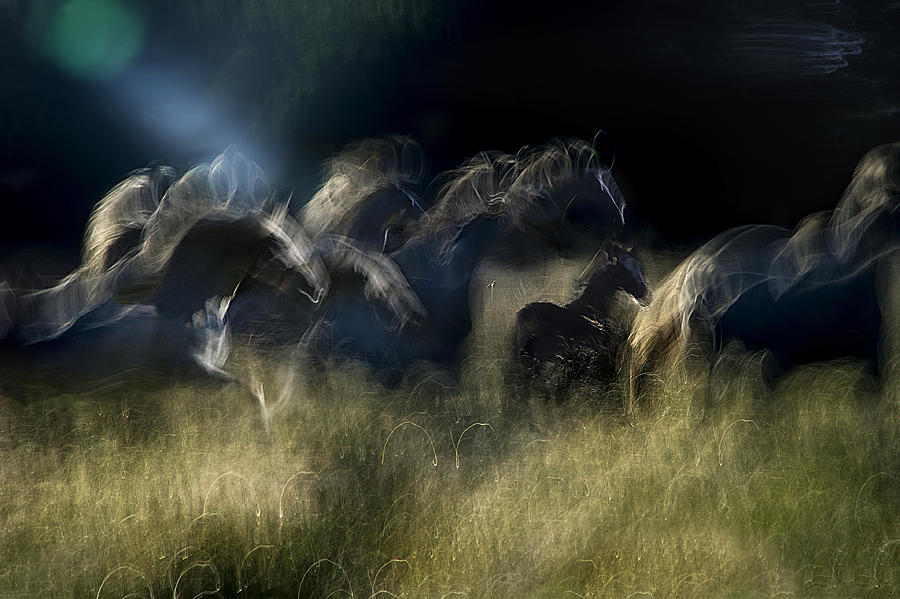 Horses Photograph - Action Horses by Milan Malovrh