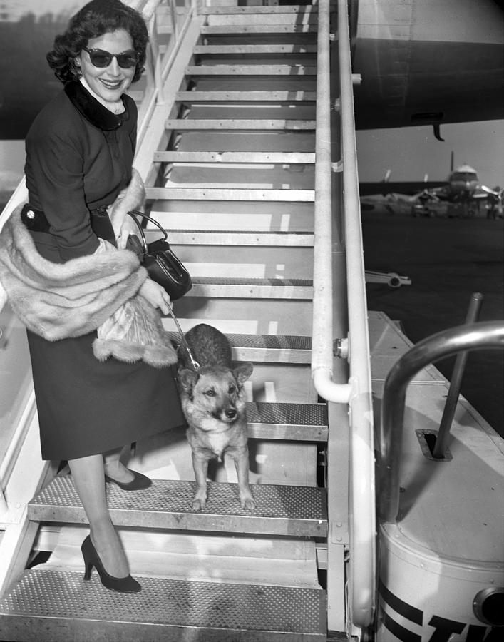 Actress Ava Gardner And Her Dog, Rags Photograph by New York Daily News Archive