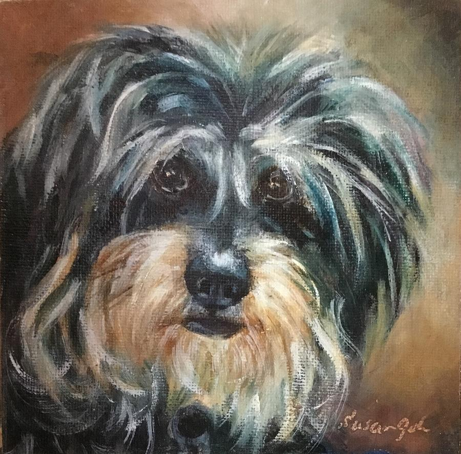 Lola Adorable cute fluffy dog by Susan Goh