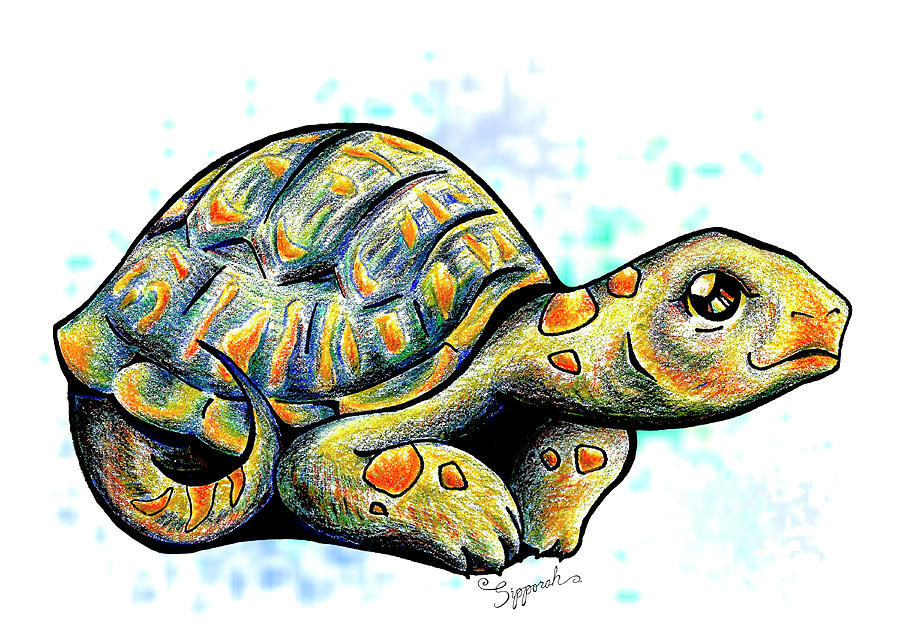 Adorable Tortoise II by Sipporah Art and Illustration