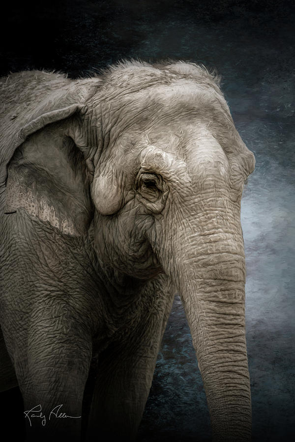 Adult Elephant by Randall Allen
