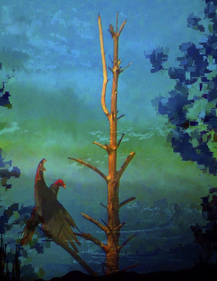 Adult Turkey Vulture-cathartes Aura Mixed Media
