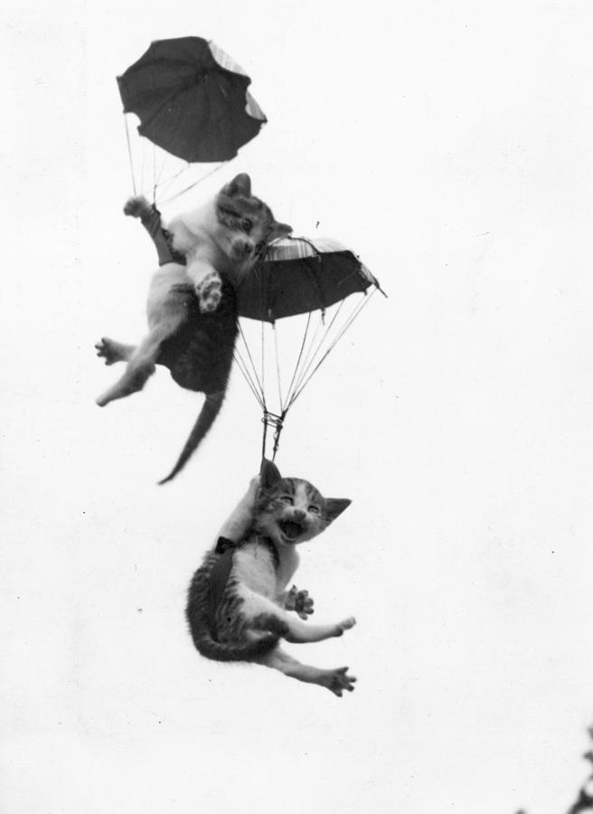 Adventurous Cats Photograph by Pearl Hall