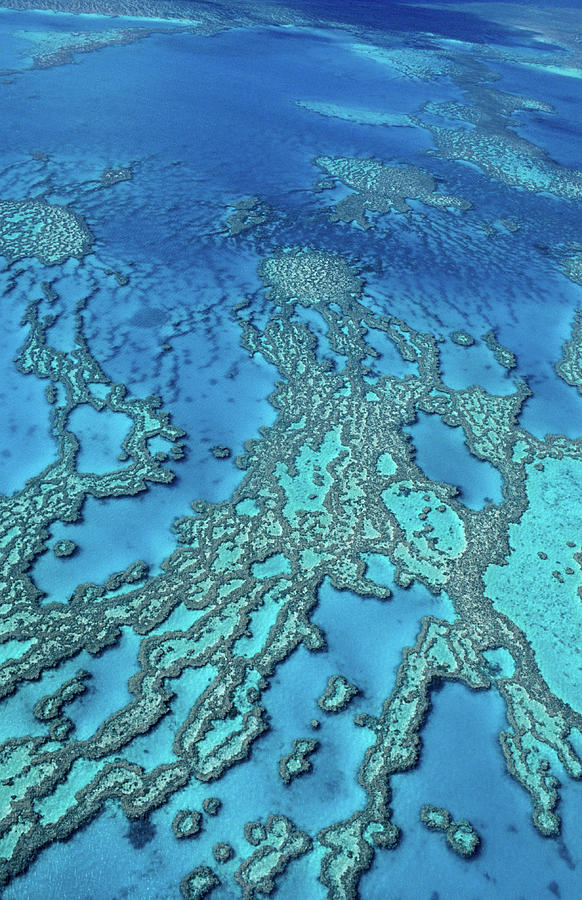 Aerial Of Hardy Reef Offshore From Photograph by Travelgame
