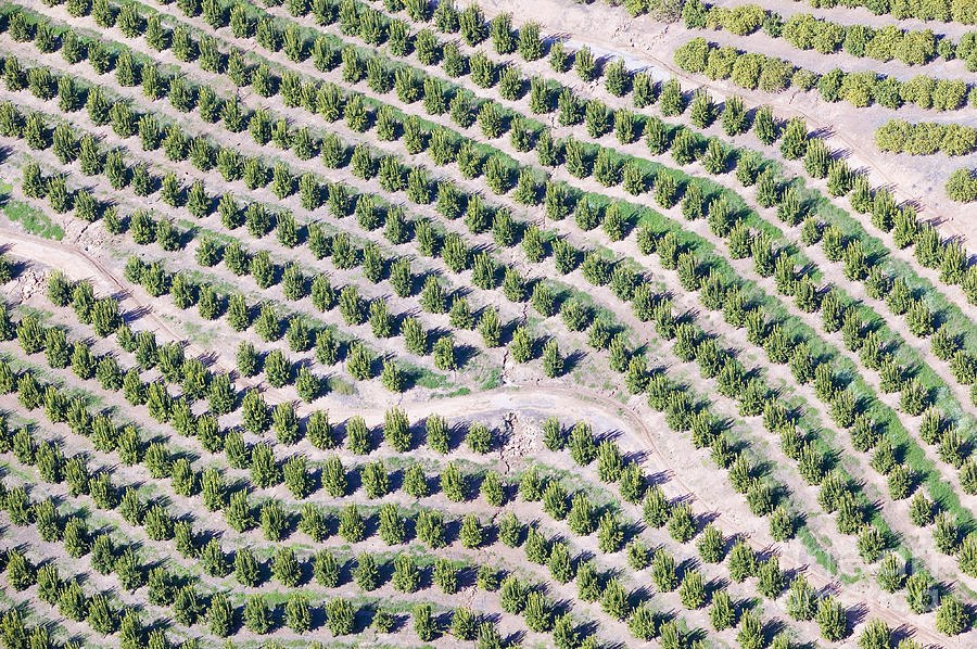 Usa Photograph - Aerial View Of Orange Grove In Ventura by Joseph Sohm