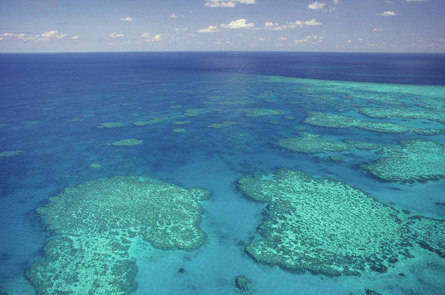 Aerial View Of The Great Barrier Reef Photograph by Tammy616