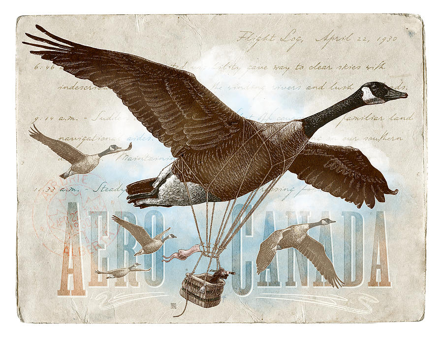 Canadian Geese Drawing - Aero Canada by Clint Hansen