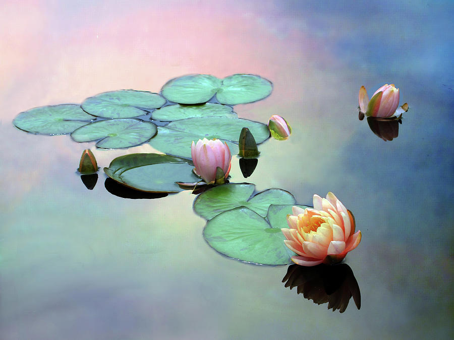 Float Photograph - Afloat by Jessica Jenney