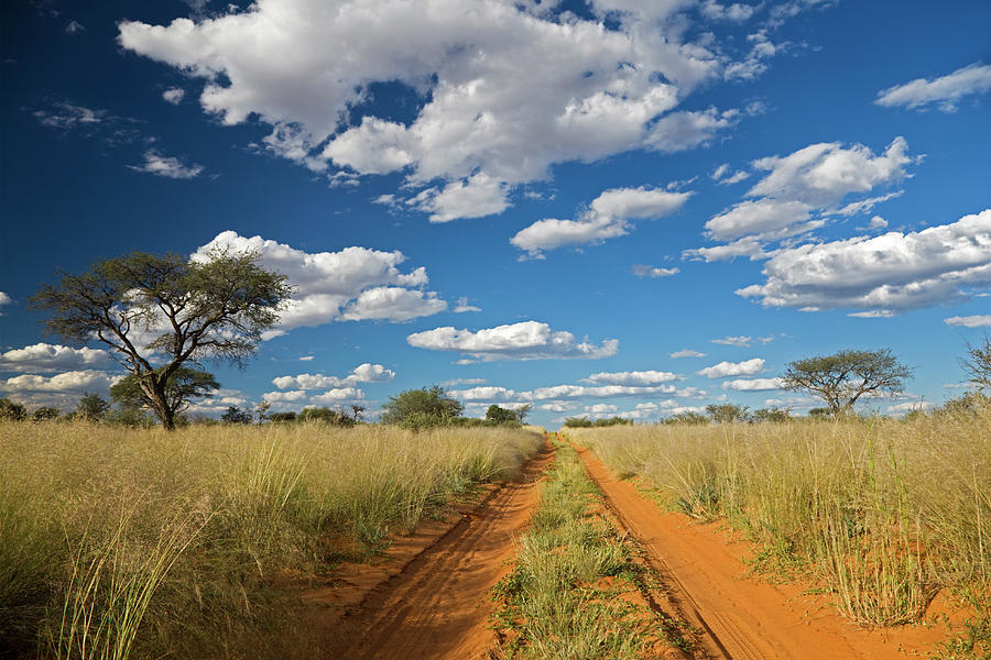 Africa, Botswana, Track Through Photograph by Westend61