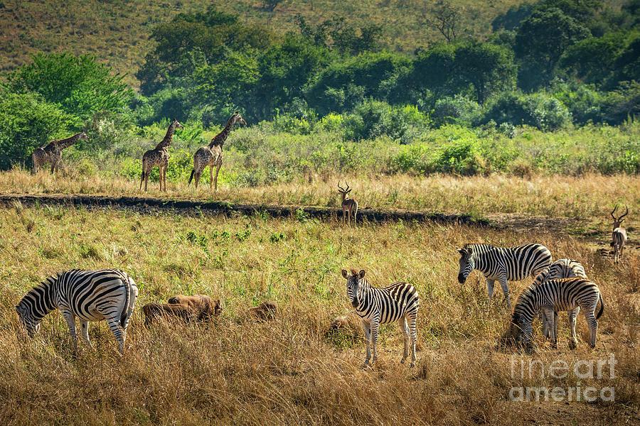 AFRICA by Jamie Pham