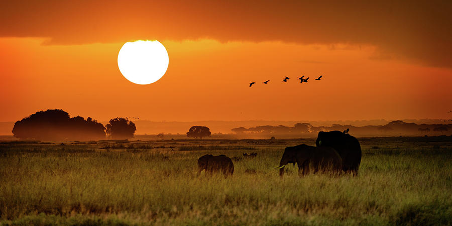 African Elephants Walking at Golden Sunrise by Susan Schmitz