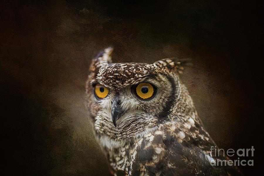 African Spotted Eagle Owl by Eva Lechner