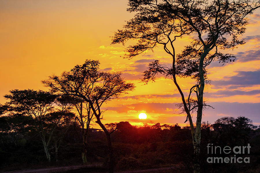 African Sunrise Photograph