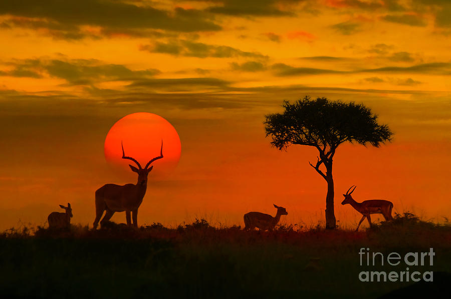 Fur Photograph - African Sunset With Silhouette Of The by Byelikova Oksana