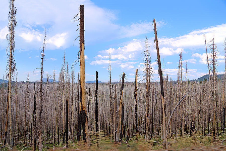 After Fire In Lassen Volcanic Park by Viktor Savchenko