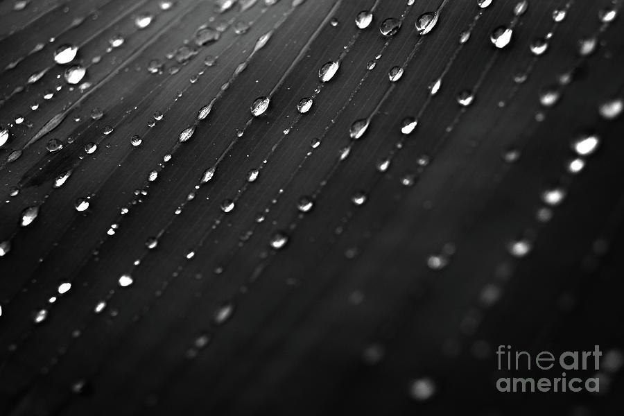 After Rain Photograph