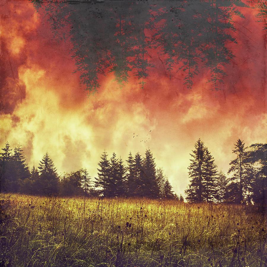 Forest Photograph - After The Rain by Dirk Wuestenhagen