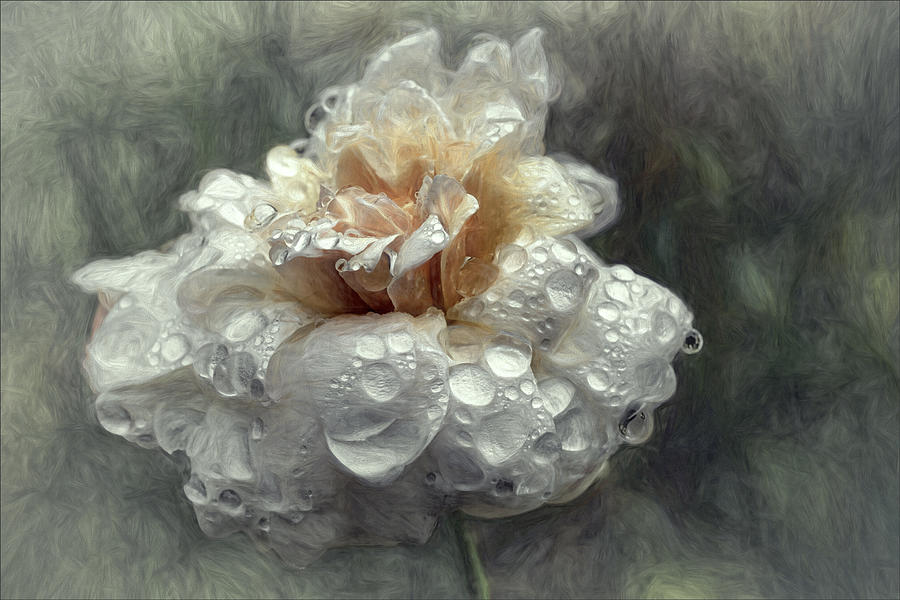 Flower Photograph - After The Shower... by Gilbert Claes