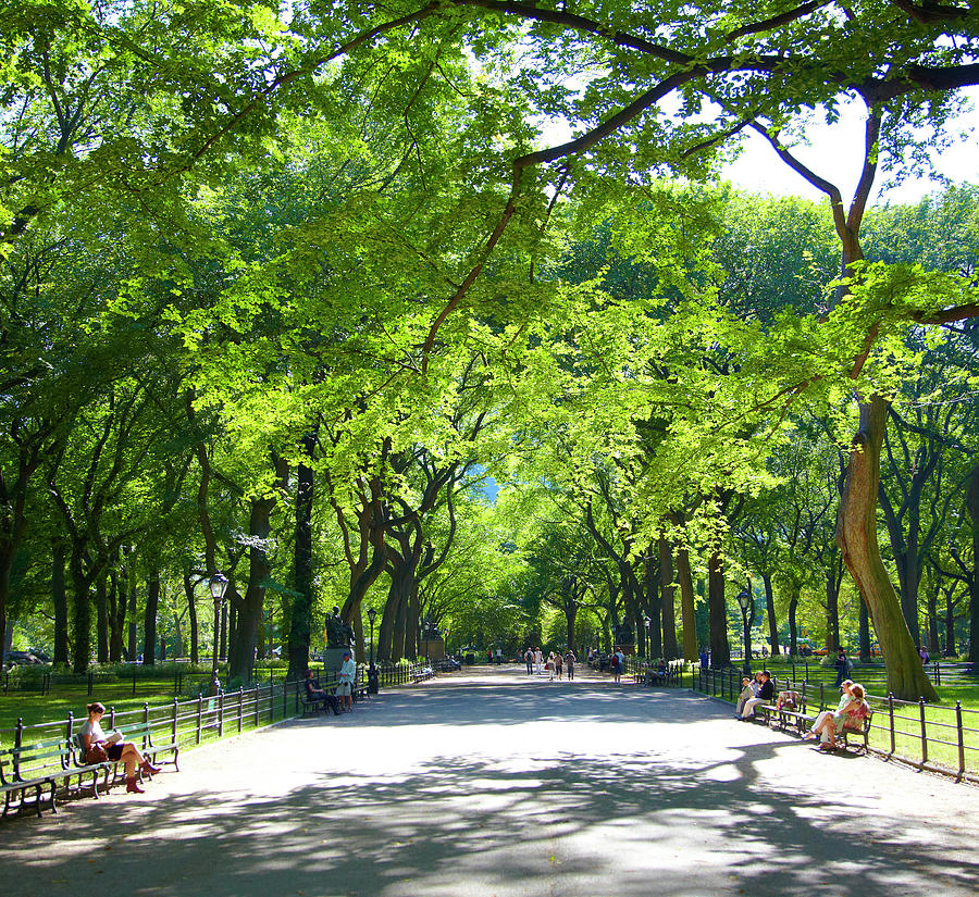 Afternoon In Central Park Photograph by Thomas Northcut