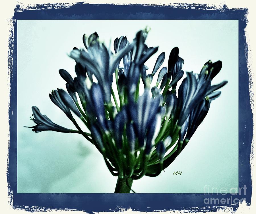 Photo Photograph - Agapanthus Blue by Marsha Heiken