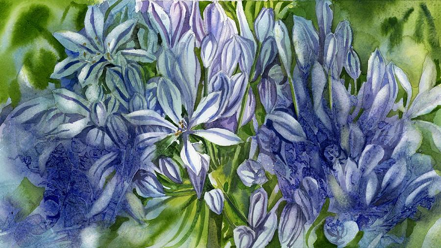 Agapanthus in blue by Alfred Ng