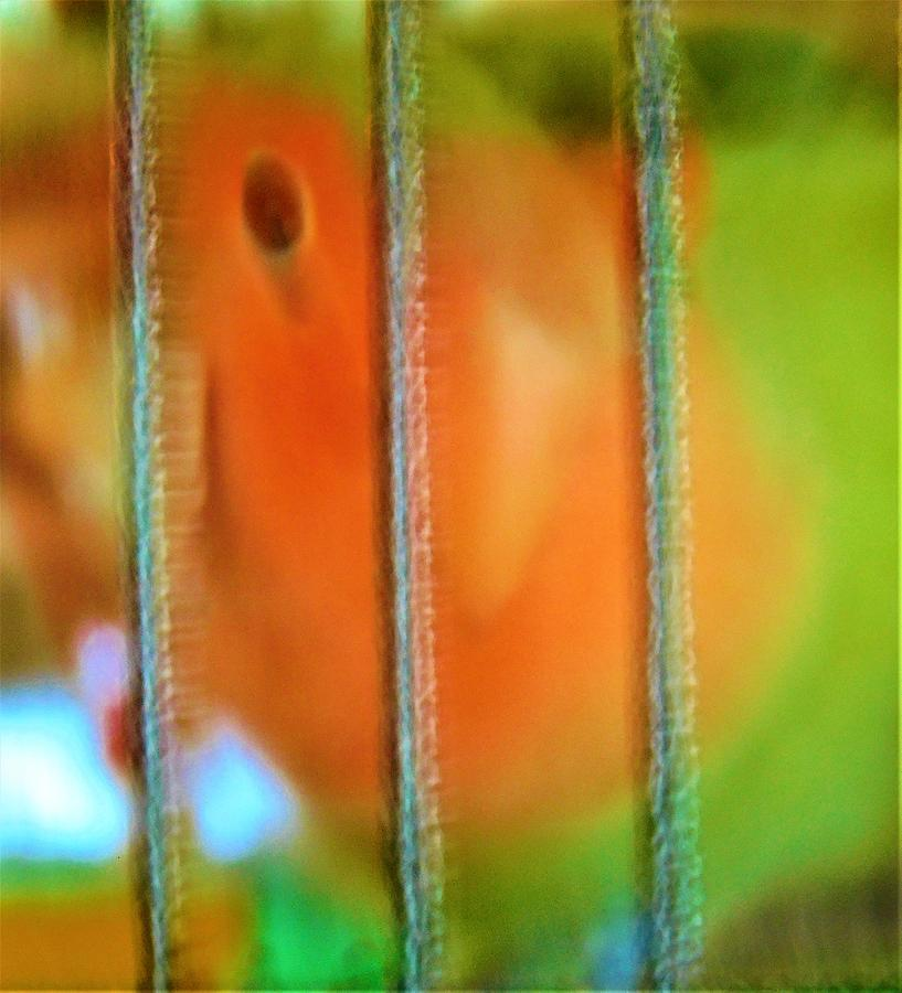 - Agapornis - Lovebird by - Theresa Nye