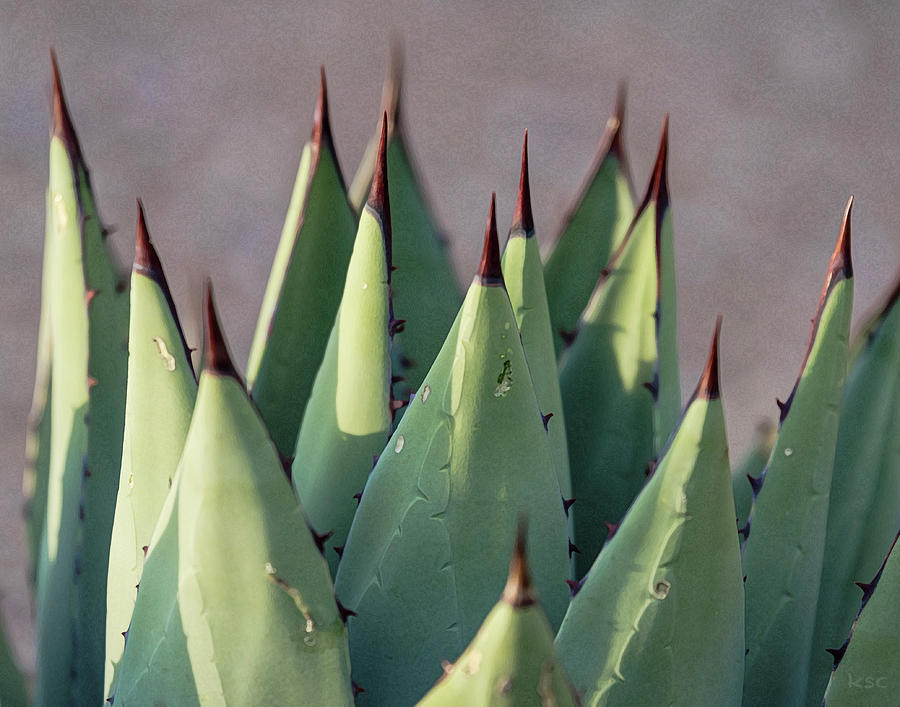 Agave 1 by Karen Conley