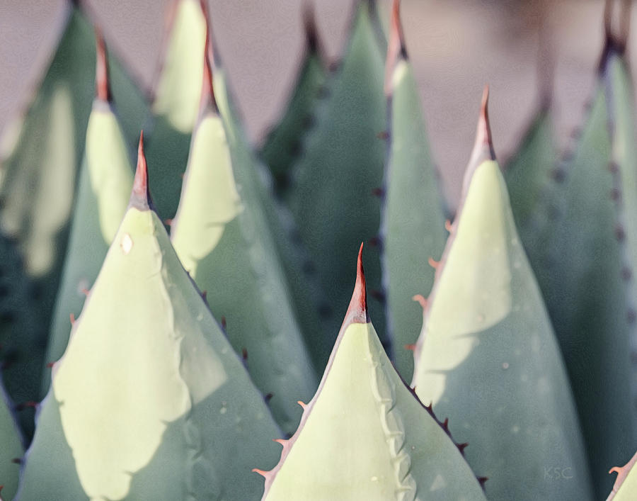 Agave 2 by Karen Conley