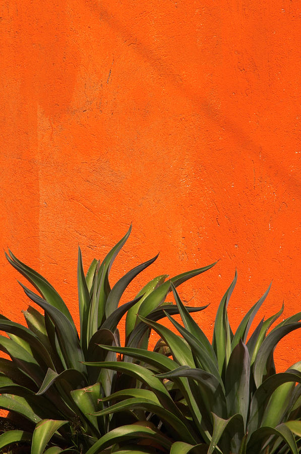 Agave Cactus, Vivid Orange Stucco Wall Photograph by 1photodiva