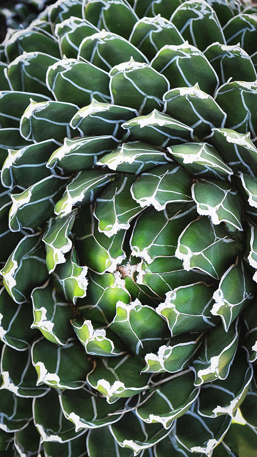 Agave Heart Abstract  by Saija Lehtonen