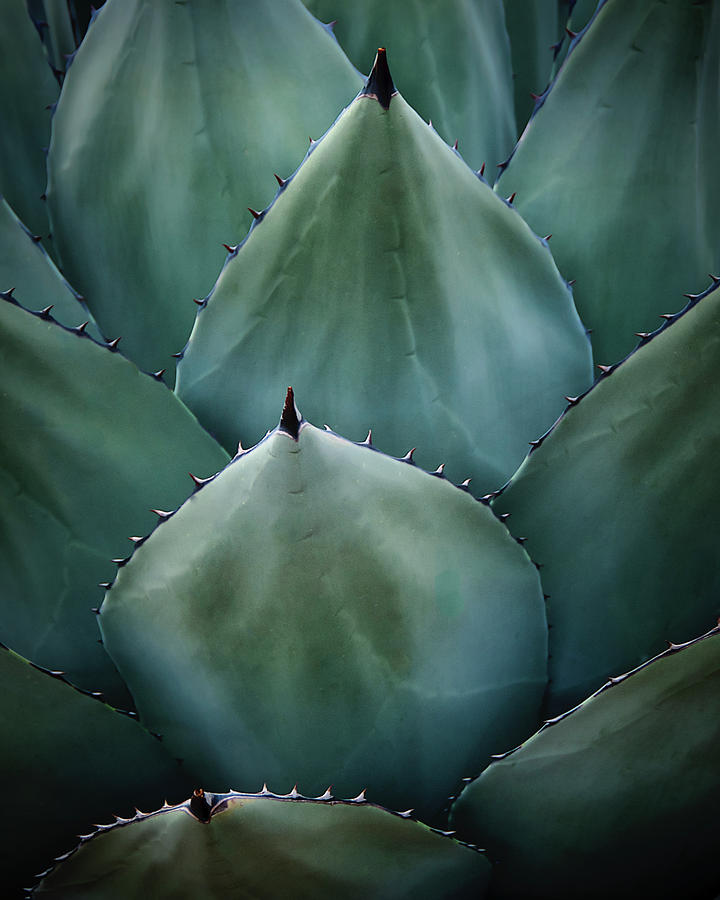 Agave Symmetry by Flying Z Photography by Zayne Diamond