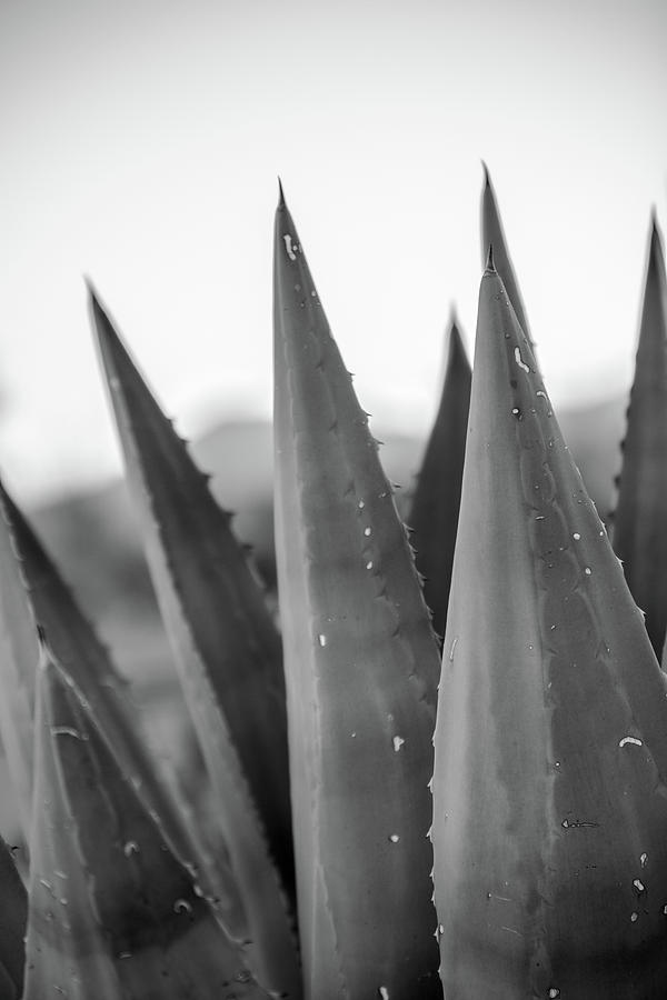 Agave by SR Green
