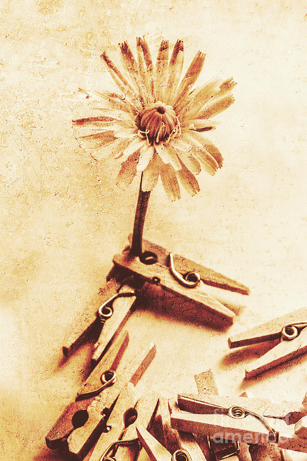 Shabby Photograph - Aging Springs by Jorgo Photography - Wall Art Gallery