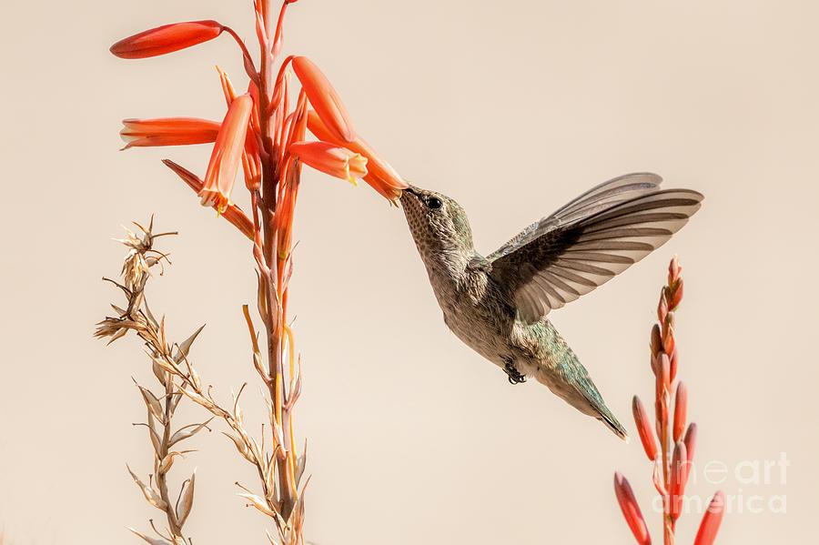 AHhhhh...  Nectar by Lisa Manifold