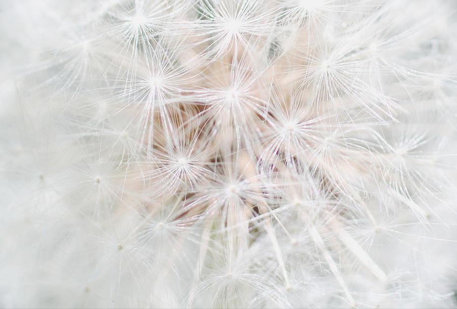 Air of Dandelion by The Art Of Marilyn Ridoutt-Greene
