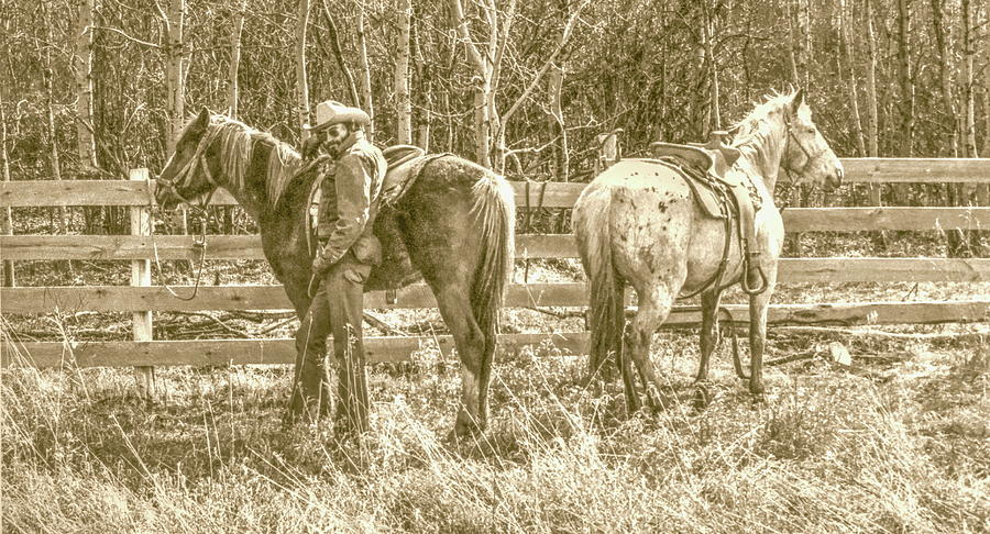 Alberta Cowboy by Jim Sauchyn