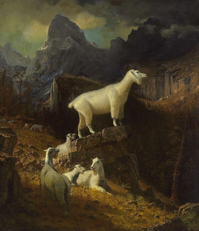 Nature Painting - Albert_bierstadt_-_rocky_mountain_goats by Albert Bierstadt