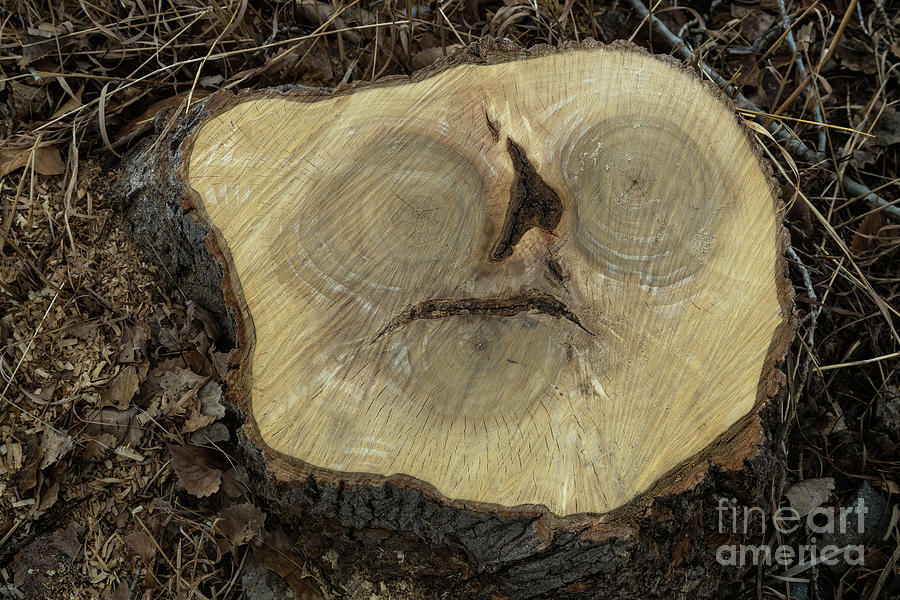 Alien in a Tree Stump by James BO Insogna