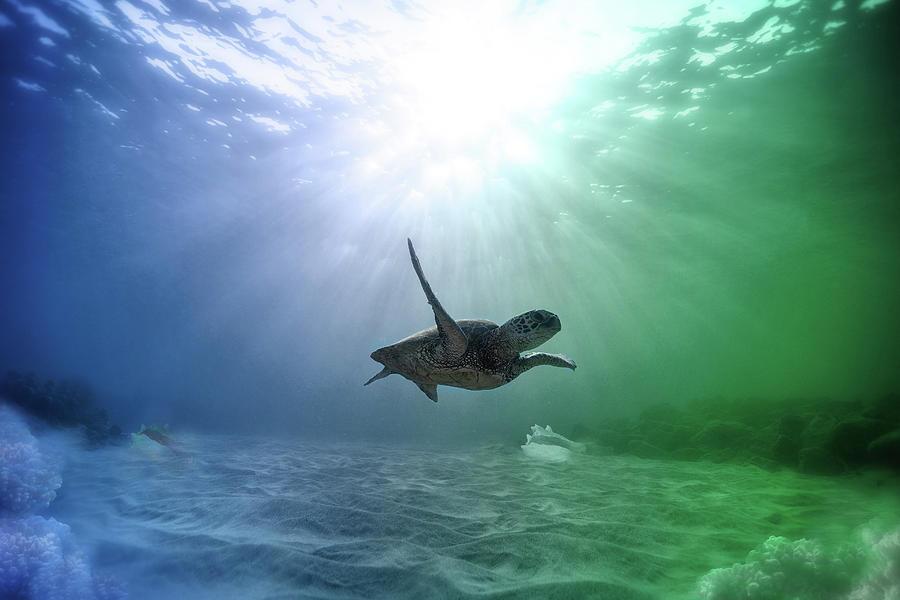 Underwater Photograph - All Alone But Oh So Happy by Johanna Hurmerinta
