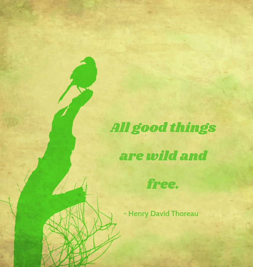 All Good Things by Judy Kennedy