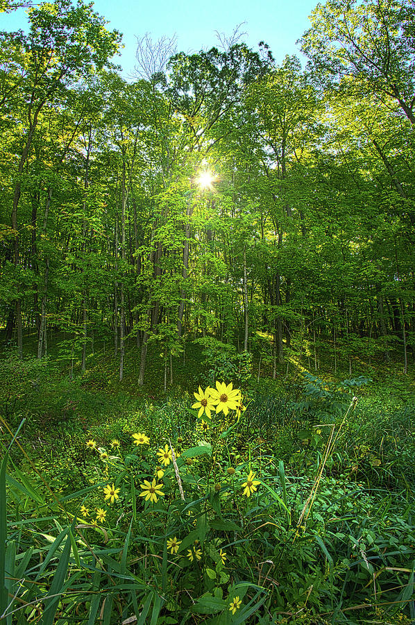All Green On The Inside by Phil Koch