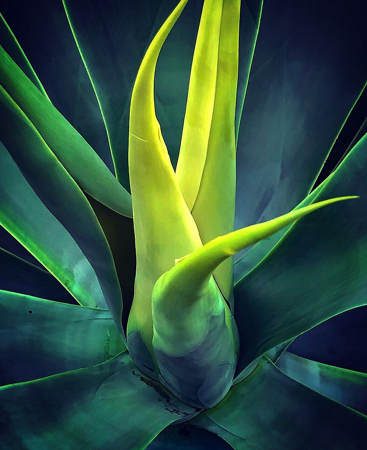 Green Photograph - All There Is by Terri Hart-Ellis