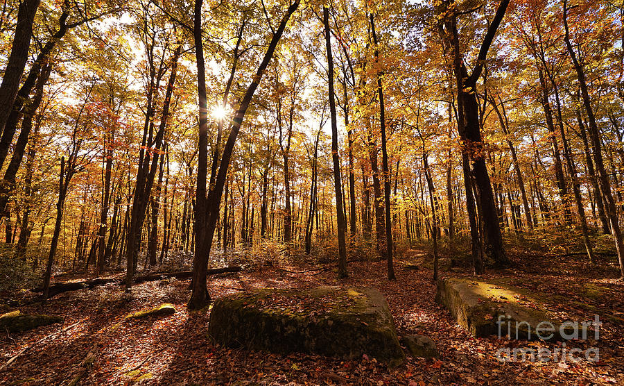 Allegheny National Forest Autumn Photograph