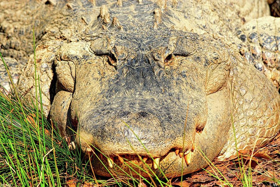 Alligator by Lisa Wooten